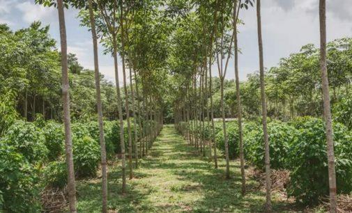 Más estímulos de Minagricultura para estimular reforestación