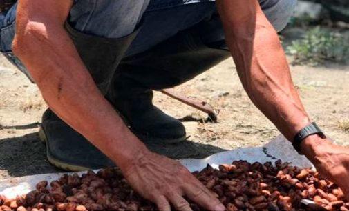 Nace asociación latinoamericana de cacaoteros en Rivera