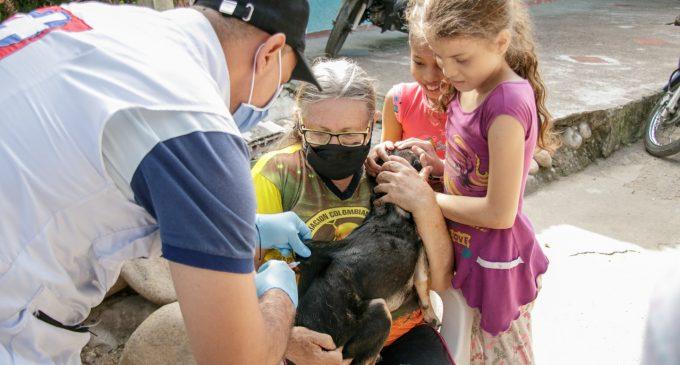Se intensifica la vacunación contra la rabia en Neiva